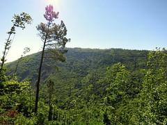 IMG_9194 (craigharrisnelson) Tags: manteigas portugal hiking boar route