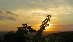 Beutelsbacher Weinberge (die.tine) Tags: beutelsbach weinberg leuchtenderweinberg