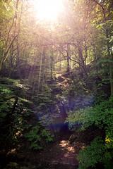 Something Divine (thomasstache) Tags: bach bume deutschland dresdnerwesten germany lensflare sachsen sonne sonnenstrahlen spaziergang wald zschonergrund dresden de