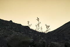 come back (edwardpalmquist) Tags: henderson lasvegas desert nevada mountain sky plant rock nature sunset outside stone