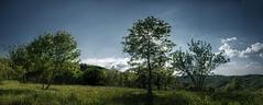 Sundown (Elliott Bignell) Tags: italy italie italia italien ligure liguria ligurien cairo montenotte ciandellacana piandellacanepa dego monti meadow wiese trees bume sundown sunset sonnenuntergang dmmerung abend abendlicht abendstimmung