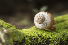 Caracol (Jonathan Johnny) Tags: caracol caramujo musgo natureza macro verde tronco