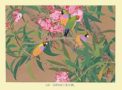 Oleander and gouldian finch (Japanese Flower and Bird Art) Tags: flower oleander nerium indicum apocynaceae bird gouldian finch chloebia gouldiae estrildidae rakusan tsuchiya nihonga woodblock print japan japanese art readercollection