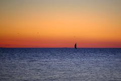 Sunset sail (gallserud) Tags: gotland sunset sailboat sea