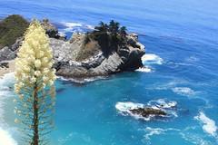 Big Sur coastline - California (oriana.italy) Tags: california bigsur pacificcoastline rocks yellowflower orianaitaly montereycounty img0188