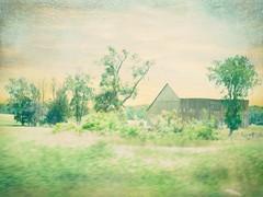 ... (France-) Tags: texture campagne ontario canada 380 grange barn arbre tree