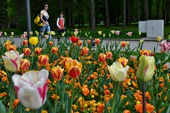 Tulips  DSC_1594 (Me now0) Tags: park europe nikond5300 basiclens 1855mmf3556 spring   5300