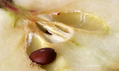 2bfcf529-8ec9-4725-89bd-0f7179fbc3e7 (hemingwayfoto) Tags: apfel obst lebensmittel macroaufnahme kerngehuse apfelkern
