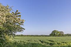 Lingen - Frhling_SAM_1248 (milanpaul) Tags: germany landscape deutschland mai landschaft frhling emsland lingen niedersachsen 2015 samsungnx300m samsung1855mm3556ois