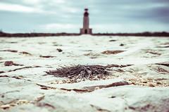 Pfad zum Leuchtturm (olipennell) Tags: lighthouse plant portugal faro fort path pflanze algarve gebude leuchtturm sagres fortalezadesagres wehranlage