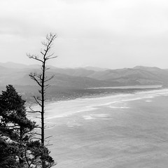 Old Guard (jwsmithphoto) Tags: oregon coastalhighway101 pacific pacificcoast tree ocean coast