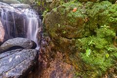 Lata Hujan (Md Farhan's Gallery) Tags: waterfall latahujan tanahmerah kelantan malaysia travel lensamalaya landscape nature longexposure stone flora tree wet sigma 1020mm