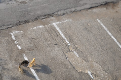 (www.tokil.it) Tags: lecce italia italy periferia periphery suburb strada street gatti cats randagi stray ombre shadows animali animals urban nikond90