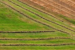 Geometrie rurali (luporosso) Tags: natura nature naturaleza naturalmente nikond300s nikon geometrie geometry rurale rural country countryside scorcio scorci paglia straw allaperto colors colori campagna marche