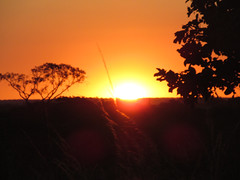 Gois (Rgis Cardoso) Tags: sunset pordosol sky sun tree sol landscape silhouete cu arvore por gois silhueta