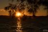 Among the sheoak part 3 (core_personal_training) Tags: australia nsw centralcoast jetty longjetty theentrance sun sunset sunrise water lake landscape nature dslr nikon nikond3300 nikkor1855 cloud clouds sky