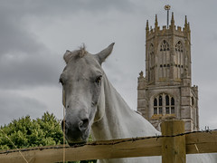 Photo-bombed (Alan Pope) Tags: horse church tower steeple