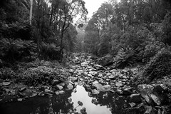 DSC02345 (Martin.Anderson) Tags: stevensons falls waterfall water forest woods explore camping bw sony a5000 victoria greatoceanroad nature landscape tree stream rocks australia