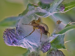 Spider Chamber (Al Abbasi) Tags: spider chamber