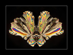 Crystal winged butterfly (tkimages2011) Tags: crystal wing butterfly insect microscope microscopy photomicrograph photomicroscopy polariser polarizer birefringence sucrose abstract creative art arty contemporary