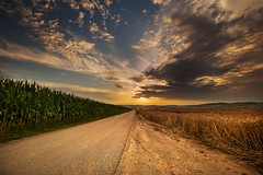 Sunset, road and fields (tomaskriz1) Tags: grain road corn moravian sunset sunlight summer sky season scenic scenery rural plant outdoor nature landscape land idyllic horizon green field farm evening environment day countryside country cloudy clouds cloud beauty beautiful background agriculture
