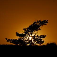 a tree at sunset (Darek Drapala) Tags: sun sunset sunrise sunshine trees tree orange evening shore sea seashore panasonic poland polska panasonicg5 baltic nature silhouette dark