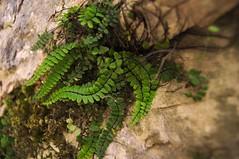 Ciudad Encantada (TrustyOldGear) Tags: cuenca ciudadencantada naturaleza planta roca verde