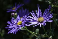 Summer flowers & bugs (wacamerabuff) Tags: edmonds flower bugs washington