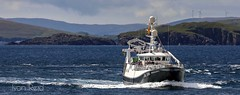 Resilient LK195 Arrives (Ivan Reid) Tags: shetland demersal whitefish new maiden voyage whitby north yorkshire whalsay fishing trawler sein netting netter arival resilient lk lerwick market fish industry lk195 sea fisherman fishermen