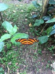 IMG_1730 (rad!x) Tags: botanicalgarden cuetzalan cuetzalandelprogreso jardinbotnico mariposa mexico puebla pueblomagico xoxoctic everyone vacation
