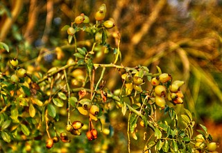 Seeds - Graines - 2009