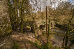 Plymbridge (Explore) (trevorhicks) Tags: bridge trees water forest canon river devon tamron 6d plymbridge