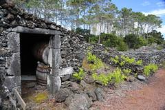 vineyard treasures (siebensprung) Tags: portugal vineyard barrel pico azores wein fass acores azoren weinanbau weinfass