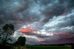 jour 152-276 (benoitfontaine442) Tags: nuages roseaux