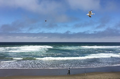 2016-07-16 somewhere beyond the sea (** RCB **) Tags: sea pacific water fishing beach sanfrancisco seagull bird waves surf 366 2016