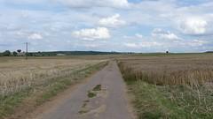 Von Bechtolsheim nach Friesenheim