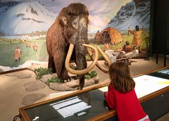 Meeting a mammoth (Ruth and Dave) Tags: catrin labreatarpits la losangeles labrea museum exhibit mammoth iceage mammal