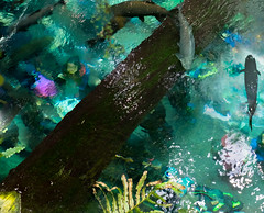San Fran 2015 (wondervolt) Tags: acquarium people reflections fish durreal green illusion
