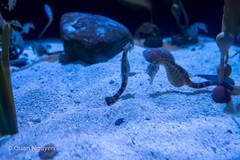 FujiXE2-0180 (QTTheory) Tags: cvg cincinnati ohio newport aquarium newportaquarium fujifilm fujinon xe2 xf 1855mmf284rlmois