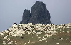 Pascoli (lincerosso) Tags: viaggio travel socotra socotraisland paesaggio landscape montagna montagnedisocotra pascoli luce bellezza armonia sorprese