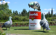 Campbells (Krissy-Anne ) Tags: art tomato giant soup pigeons large can campbells oversize soupcan canadianmuseumofcivilization