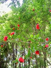 100_5532 (Sasha India) Tags: iran irn esfahan isfahan