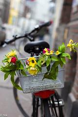 Blumenrad (Nik He) Tags: fahrrad blumen bokeh verschwommen hintergrund unscharf effekt farben uncharf 50mm blende 22