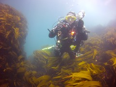 18 July 2016 - Scillies Trip PICT0207 (severnsidesubaqua) Tags: scillies scilly scuba diving