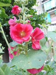 091 (en-ri) Tags: fiori fiorellini sony sonysti flowers