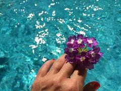 (Vallelitoral) Tags: flor flower pool piscina contraste mano hand mujer woman girl cute nice retro vintage iphone iphonegraphy flickr flickraward hotelmolinodelsanto estacindebenaojn purple blue reflection sun sol reflejos light luz