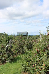 At the Petch Orchard (pegase1972) Tags: qc qubec quebec canada monteregie montrgie verger orchard pomme