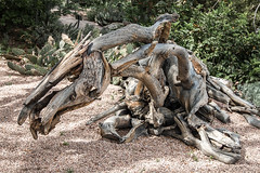 The Nature of Horses 1 (bigvern) Tags: horse abstract art 20d animals gardens canon garden wooden colorado denver deborah botanic butterfield amimals bigvern