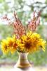 Sunny Flowers (Cobra_11) Tags: flowers light dog sun smile canon licht spring sunny blumen sonnig canoneos ef50mmf18ii frühling frühjahr greatday edwardfurlong ef50mm118ii eddiefurlong canoneos450d digitalrebelxsi