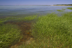 Estuary (brucetopher) Tags: ocean travel sea vacation holiday green beach water beauty grass bay underwater tour scenic scene estuary clear jade turquois touring saltmarsh saltwater crystalclear capecodbay eelgrass